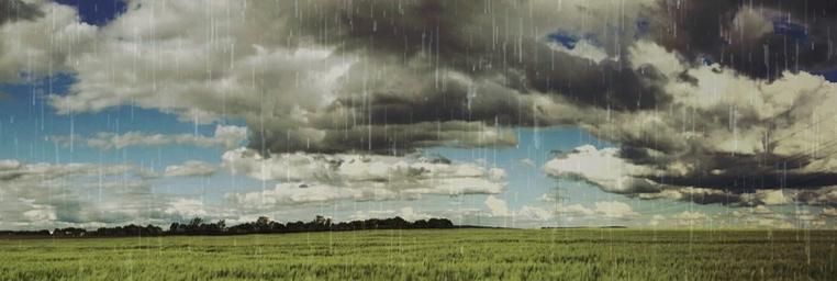 雨のフィールド